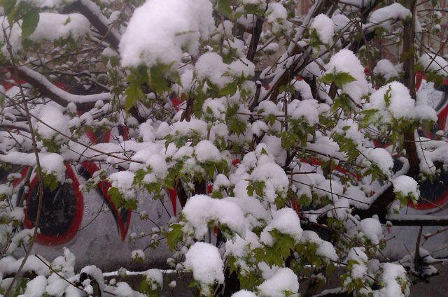 Май иркутян «порадовал» снегом.