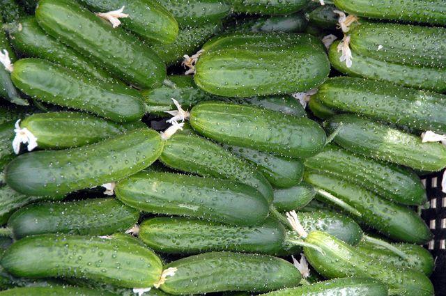 Как выращивать овощи в открытом грунте