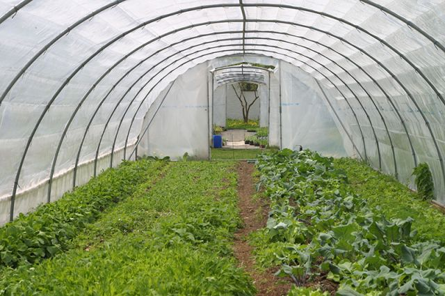 Когда выращивать рассаду в теплице 772