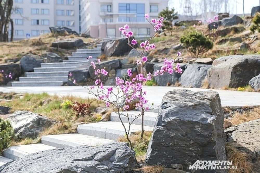 Подобное сочетание: твёрдости камня и нежности цветка на Русском создала сама природа. Люди лишь лестницу рядом положили.