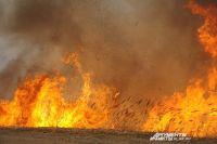 Из-за лесного пожара погибло множество сосен.