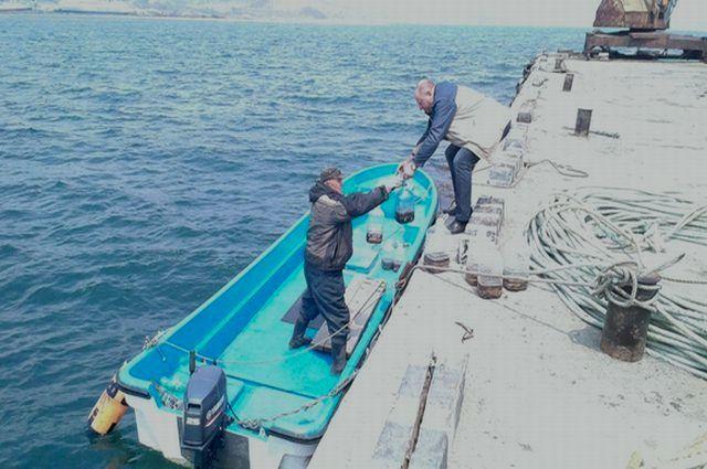 Молодого трепанга отпускают в море