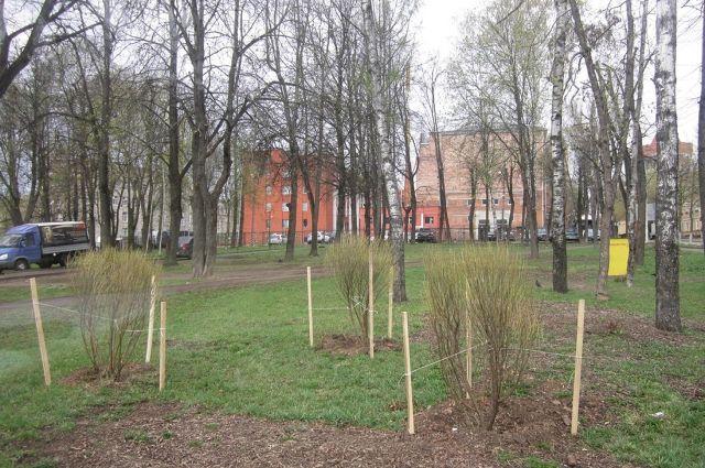 На улицах Екатеринбурга высадят за май 8 тысяч новых деревьев