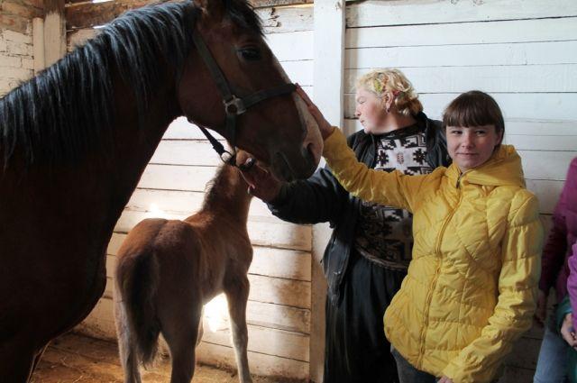 Школьники Анжеро-Судженска побывали на местной конюшне.