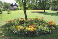 В Омске высадят около 5,5 млн цветов.