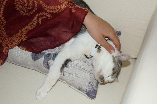 Посетители котокафе могут не только погладить кошку, но и забрать с собой