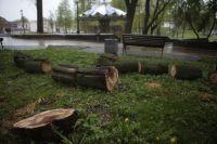 Гнилое дерево, не выдержало сильного ветра и упало на пожилую женщину