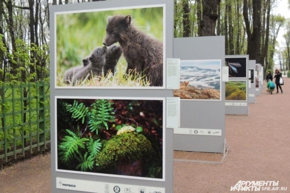 Фотопроект гармонично вписался в природу Летнего сада.