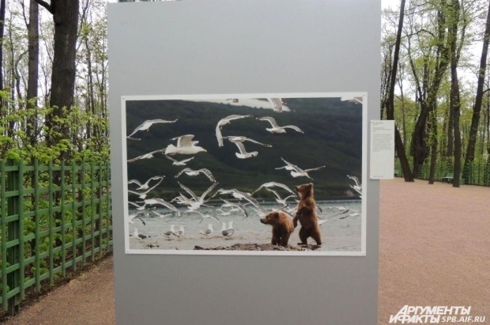 "Фото ""Желание полета"" сделано на Камчатке."