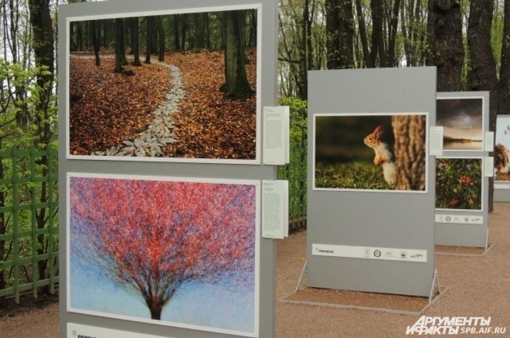 Фотографии призывают людей сохранить лес и его обитателей.