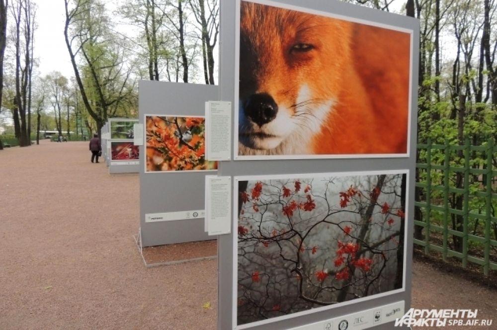 Выставка состоит из 60 фотографий лесной флоры и фауны.