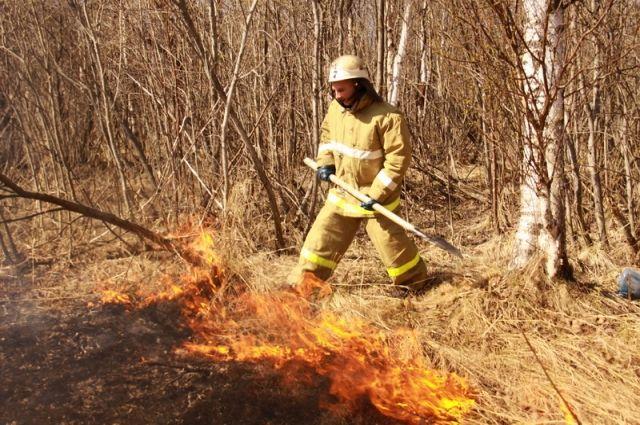 Причиной лесных возгораний чаще всего становятся сельхозпалы.