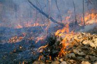В Омской области продолжают гореть леса.