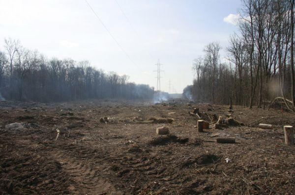 Сплошная рубка леса