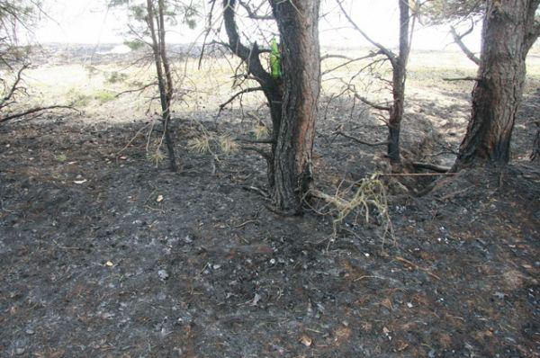 Обгорание стволов деревьев