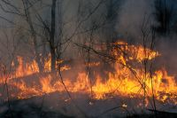 Из=за пожара сгорело 15,5 гектаров леса.