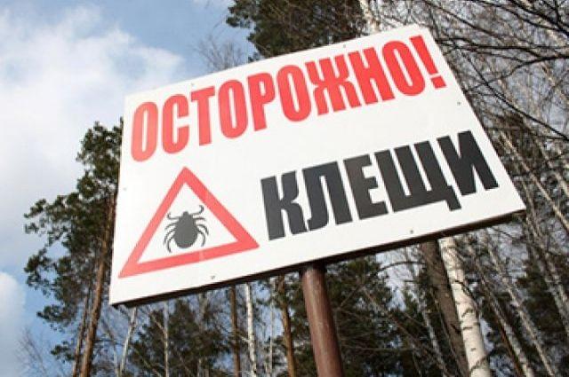 На Среднем Урале риск пострадать от клещей крайне высок