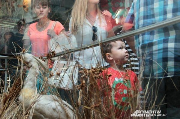 В зале «Природа края» краеведческого музея можно было увидеть флору и фауну Волгоградской области.