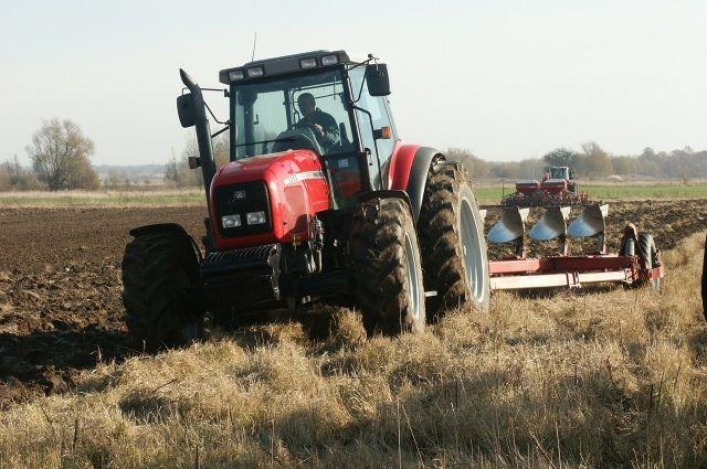 Урожай с дополнительных посевных площадей  позволит сократить объемы приобретения  головным предприятием зерна от других производителей.