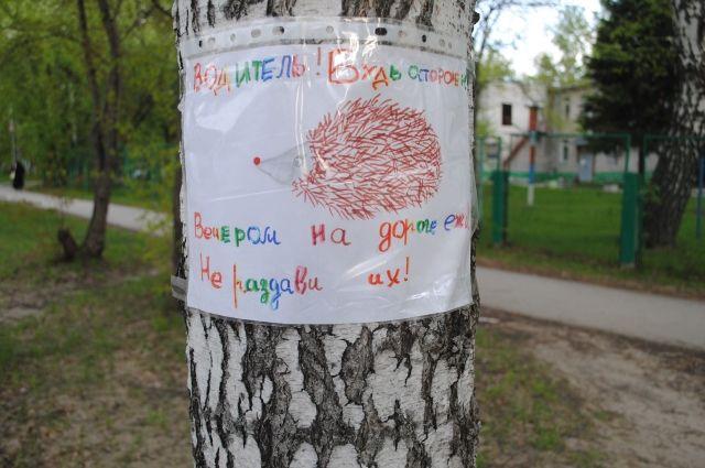 На улицах Академгородка появились плакаты, призывающие водителей быть осторожнее на дорогах из-за ежей.