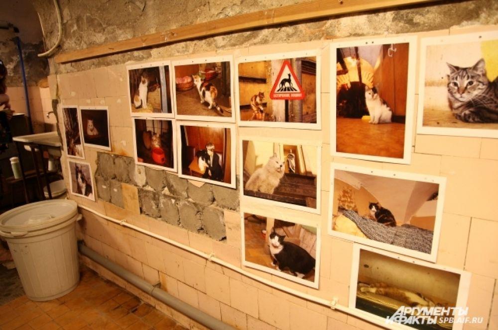 Портреты Эрмитажных котов представлены на выставке в подвалах Эрмитажа
