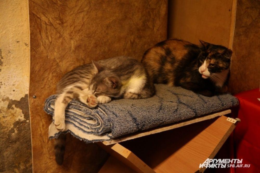 У каждого кота есть своя постель