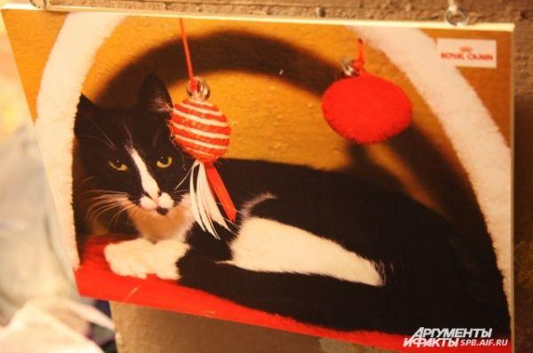 Портреты Эрмитажных котов представлены на выставке в подвалах Эрмитажа: