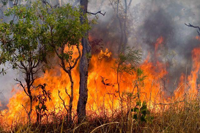 Лесные пожары стали причиной запрета на посещение лесов.