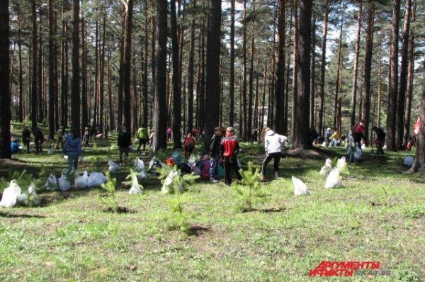 Рощу считают реликтовой, благодаря столетним соснам, некогда бывшим частью великой сибирской тайги.