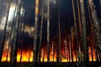 Пожар удалось локализовать только на следующий день после поджога.