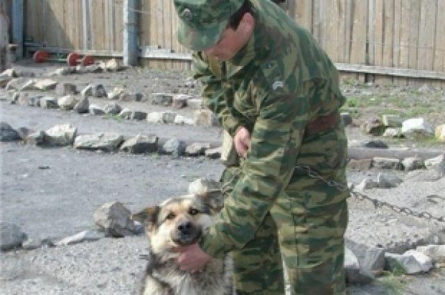 Пограничники подготовили для челябинцев концерт с участием служебных собак