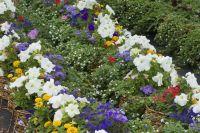 В выборе цветов участников фестиваля не ограничивают.