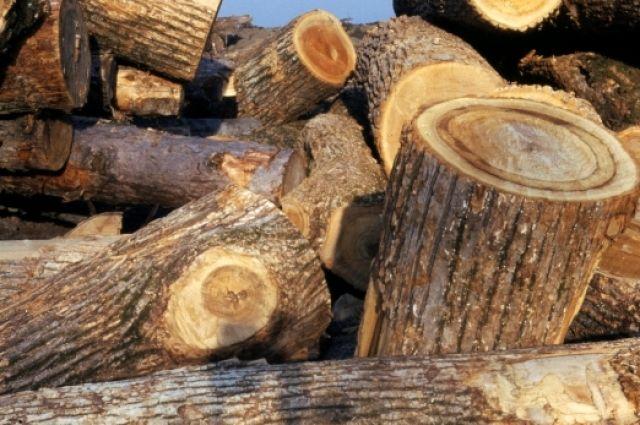 В Омске вырубают деревья для строительства различных объектов.