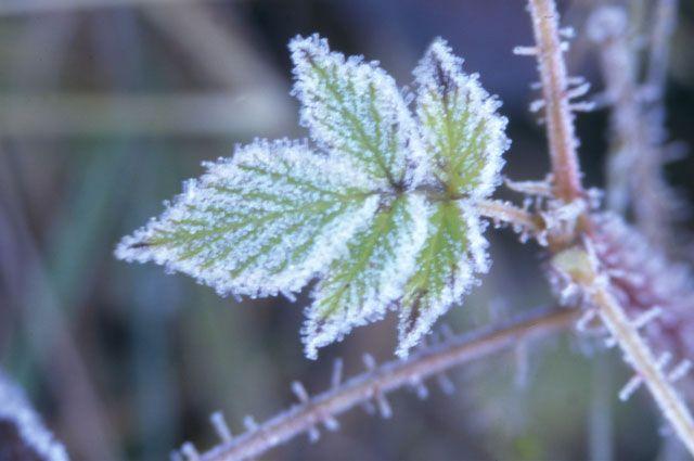 Заморозки могут негативно отразиться на растительности.