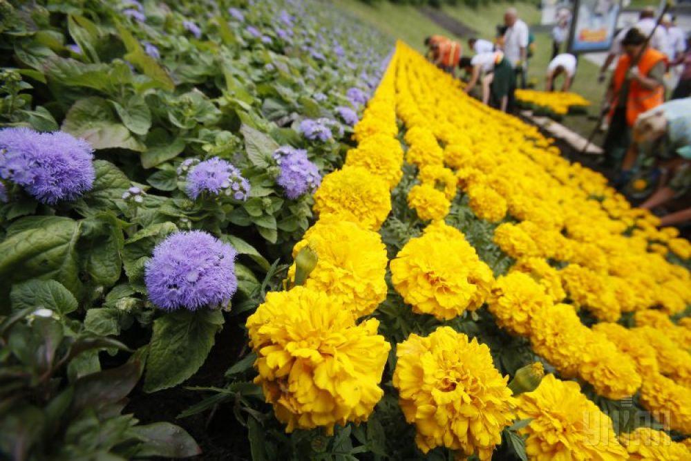 Декоративный элемент из цветов в виде флага Украины