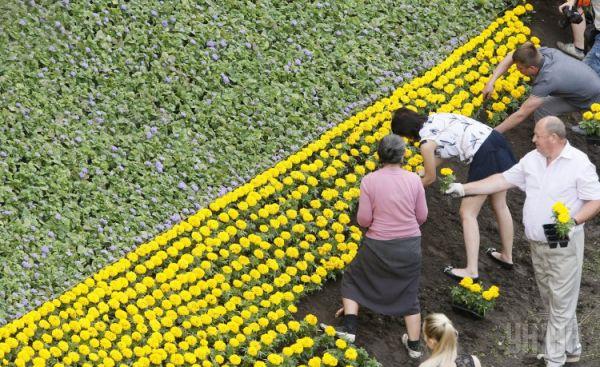 Композиция из цветов принимает форму украинского флага