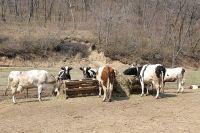 Вируса ящура у крупного рогатого скота в Приморье пока не обнаружено.