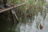Омские рыбаки продолжают ловить рыбу.