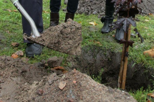 Во время высадки растений подкормка очень важна.