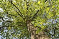 В Омске должно стать ещё больше деревьев.