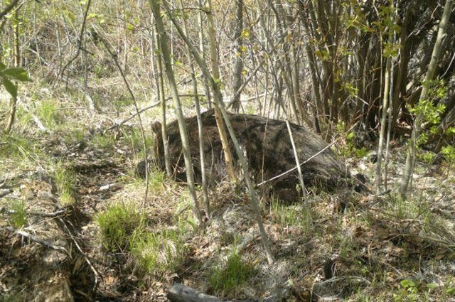 При нападении медведя одному человеку удалось сбежать.
