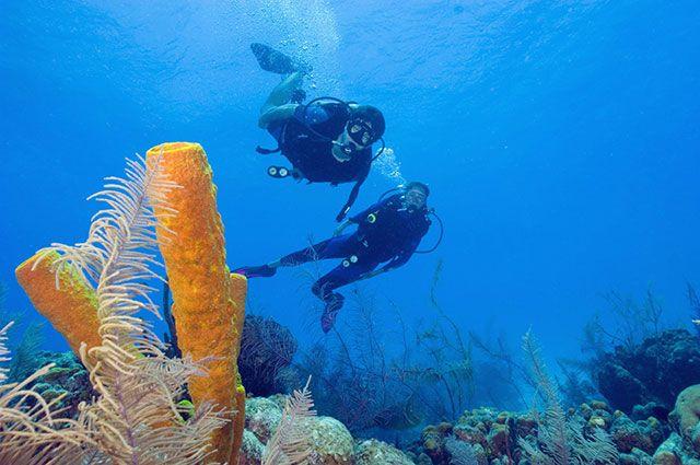 Подводное плавание с аквалангом - Scuba diving