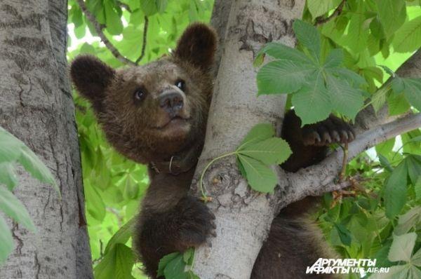 Медвежонок Юля.