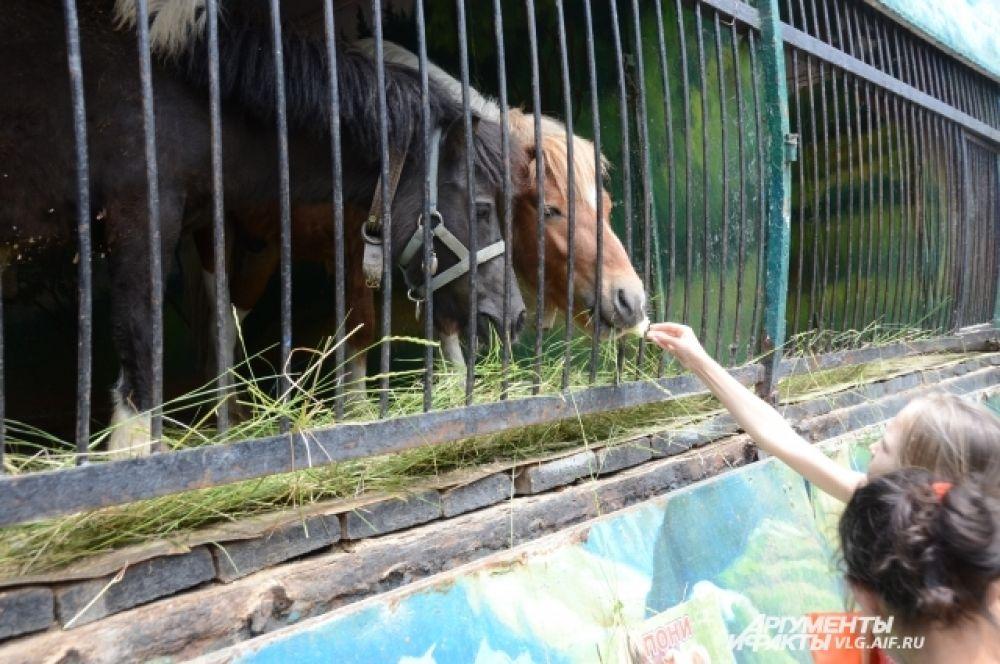 В зоопарке дети могут кормить пони.