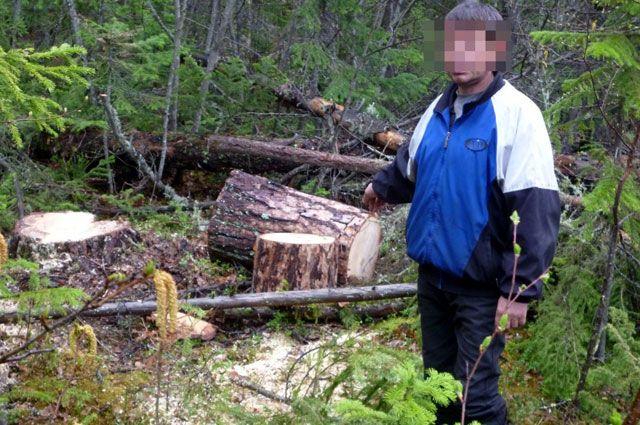 От дейтсвий нелегальных лесорубов пострадало Северное лесничество.