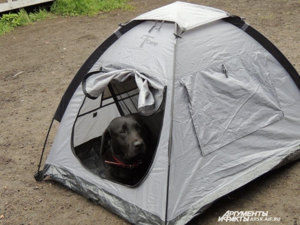В таких палатках собаки-спасатели живут в походах.