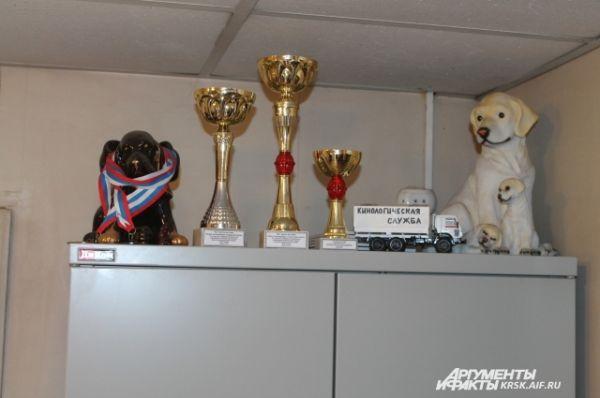 Кубки собак из кинологической службы.