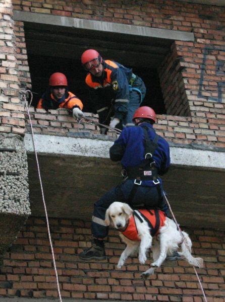 Собак поднимают на высоту для проведения работ.
