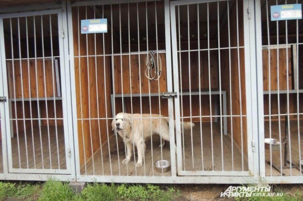 Собаки МЧС живут в отдельных вольерах.