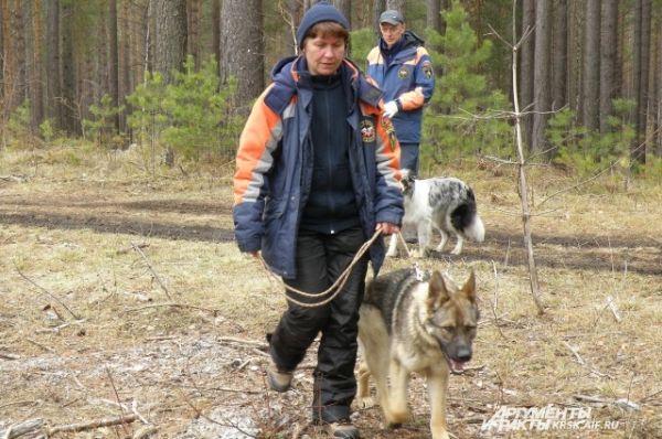 Собаки ищут пропавших людей в лесу.